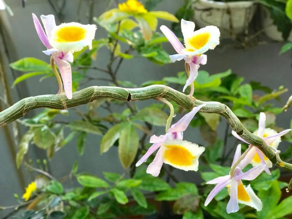 Thăm khu vườn hàng chục loại hoa và rau sạch của nghệ sĩ gạo cội Trung Dân-14