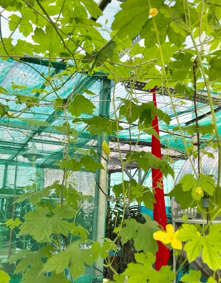 Thăm khu vườn hàng chục loại hoa và rau sạch của nghệ sĩ gạo cội Trung Dân-18