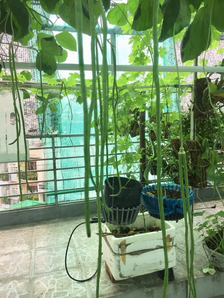 Thăm khu vườn hàng chục loại hoa và rau sạch của nghệ sĩ gạo cội Trung Dân-20