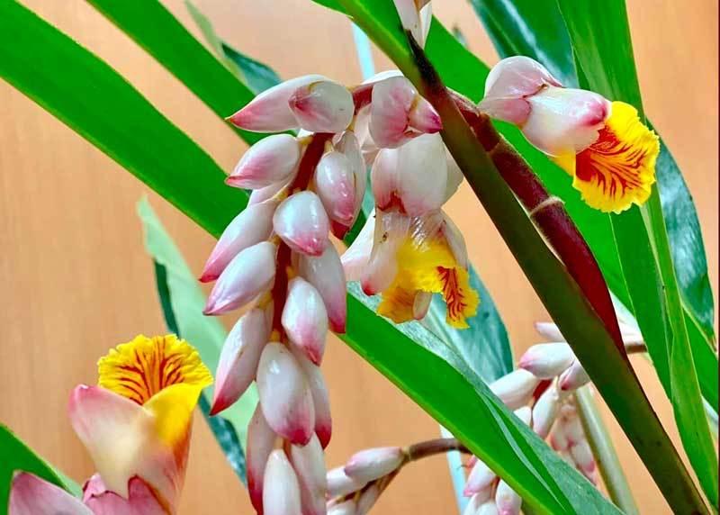 Hoa dại bờ bụi siêu đắt đỏ, mối buôn bán 2.000 cành/ngày-3