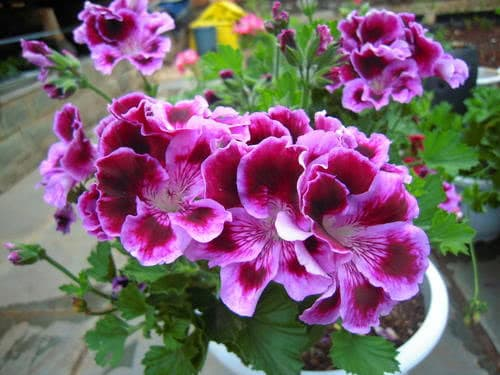 Đây là thứ không nên vứt đi, hãy đem lót dưới chậu trồng cây, hoa sẽ không bị thối rễ, vàng lá, cứ phát triển ầm ầm-1