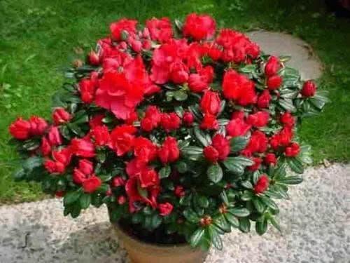 Đây là thứ không nên vứt đi, hãy đem lót dưới chậu trồng cây, hoa sẽ không bị thối rễ, vàng lá, cứ phát triển ầm ầm-5