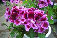 Đây là thứ không nên vứt đi, hãy đem lót dưới chậu trồng cây, hoa sẽ không bị thối rễ, vàng lá, cứ phát triển ầm ầm