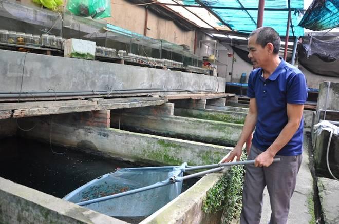Nuôi loại cá tí hon trong chai phế liệu, lão nông Hà Nội thu về hàng trăm triệu đồng-5