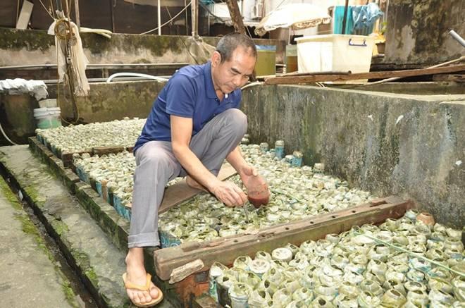 Nuôi loại cá tí hon trong chai phế liệu, lão nông Hà Nội thu về hàng trăm triệu đồng-6