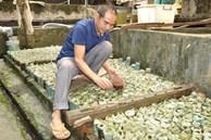 Nuôi loại cá tí hon trong chai phế liệu, lão nông Hà Nội thu về hàng trăm triệu đồng