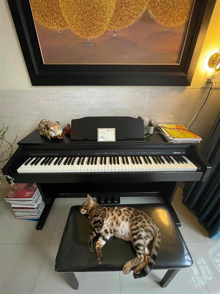 Uyên Linh khoe nhà tối giản toàn tranh với mèo bình yên vô cùng-4