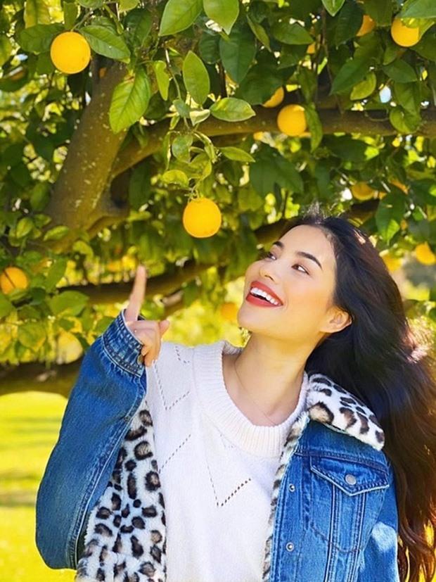 Khám phá khu vườn hàng chục loại trái cây của hoa hậu Phạm Hương ở Mỹ-1