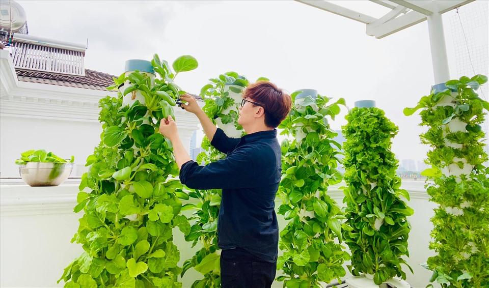 MC Đại Nghĩa chia sẻ bí quyết trồng rau thủy canh trên sân thượng đúng cách-2
