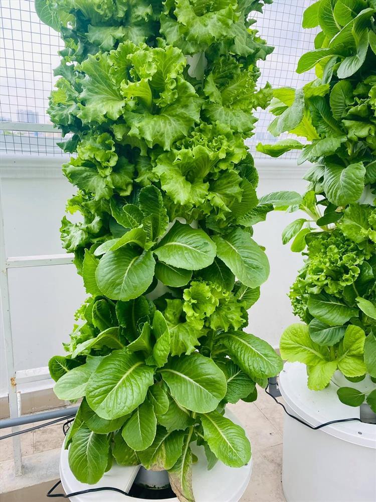 MC Đại Nghĩa chia sẻ bí quyết trồng rau thủy canh trên sân thượng đúng cách-5