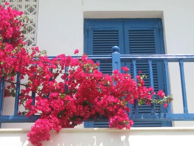 Trồng hoa ở ban công nhớ nguyên tắc này hút tài lộc vào nhà, gia chủ ngày càng phát tài-1