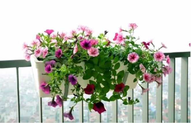 Trồng hoa ở ban công nhớ nguyên tắc này hút tài lộc vào nhà, gia chủ ngày càng phát tài-2