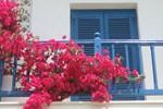 Trồng hoa ở ban công nhớ nguyên tắc này hút tài lộc vào nhà, gia chủ ngày càng phát tài