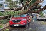 TP.HCM: Cây xanh ngã đổ ra đường, đè trúng tài xế Gojek đang chở khách nữ lưu thông