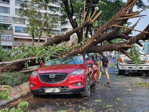 TP.HCM: Cây xanh ngã đổ ra đường, đè trúng tài xế Gojek đang chở khách nữ lưu thông-4
