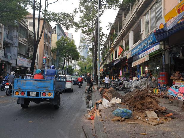 TP.HCM: Cây xanh ngã đổ ra đường, đè trúng tài xế Gojek đang chở khách nữ lưu thông-3