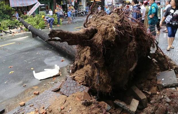 TP.HCM: Cây xanh ngã đổ ra đường, đè trúng tài xế Gojek đang chở khách nữ lưu thông-1
