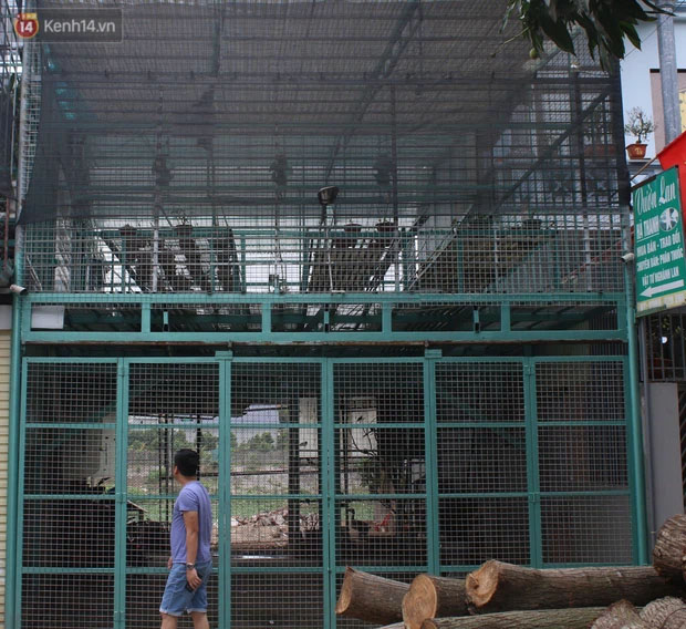 Đồn đoán chủ vườn lan đột biến ở Hà Nội ôm hàng trăm tỷ bỏ trốn: Chủ vườn lan từng làm lái xe 3 bánh-2
