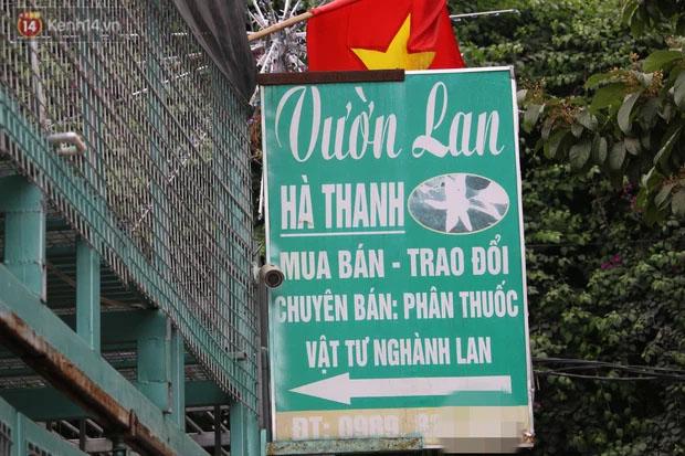 Đồn đoán chủ vườn lan đột biến ở Hà Nội ôm hàng trăm tỷ bỏ trốn: Chủ vườn lan từng làm lái xe 3 bánh-3