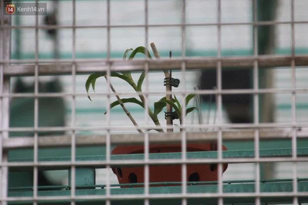 Đồn đoán chủ vườn lan đột biến ở Hà Nội ôm hàng trăm tỷ bỏ trốn: Chủ vườn lan từng làm lái xe 3 bánh-4
