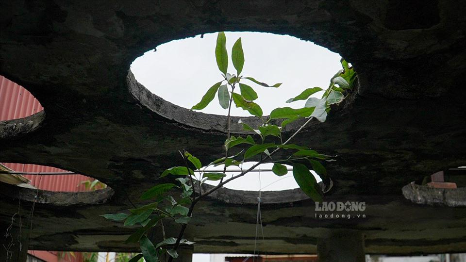 Nhà vườn 300m2 tại phố cổ Hà Nội: Đại gia trả giá 180 tỉ cũng không bán-11