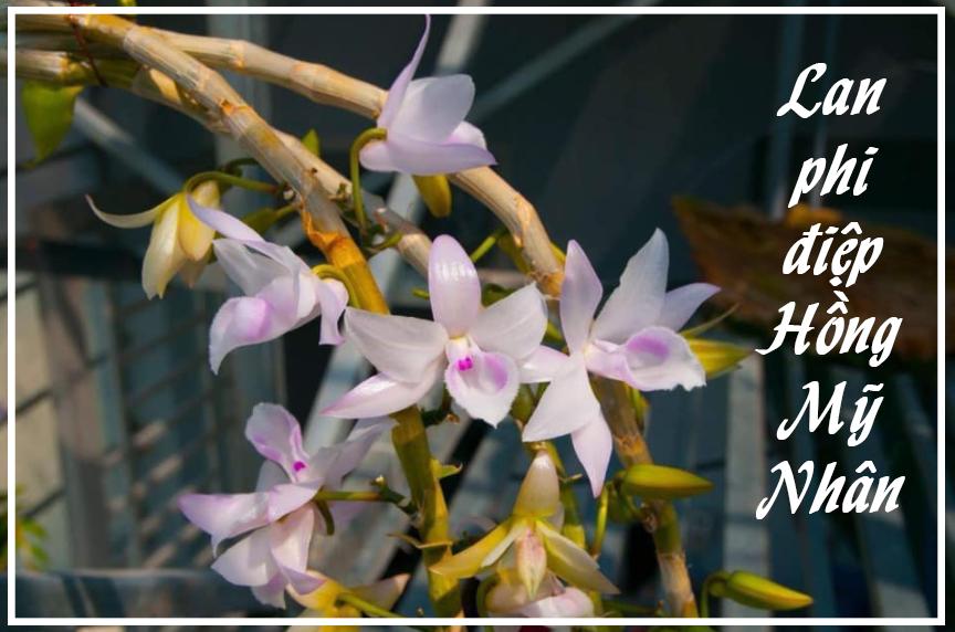 Lan đột biến là hoa gì mà làm bùng lên cơn sốt bạc tỷ của người Việt?-1