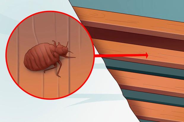 5 dấu hiệu cho thấy rệp đang làm tổ trong nhà của bạn, hãy cẩn thận-2