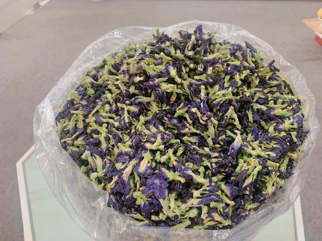 Hoa đậu biếc mọc trước hiên nhà, sấy khô được hét giá nửa triệu đồng/kg-1