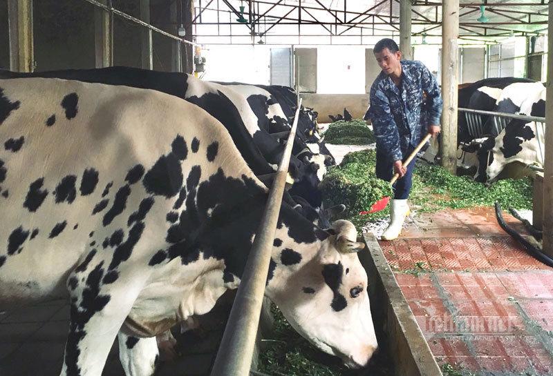 Liều vay 300 triệu làm ăn, 9 năm sau anh nông dân đếm tiền tỷ-3