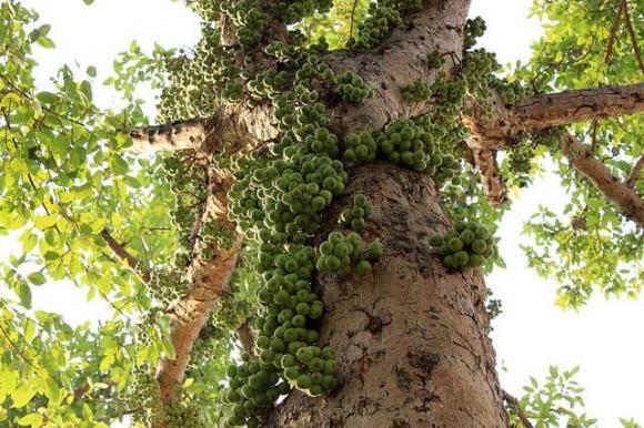 5 loại cây nên trồng trước cửa nhà giúp gia chủ làm ăn phát đạt, ngày càng giàu có-2