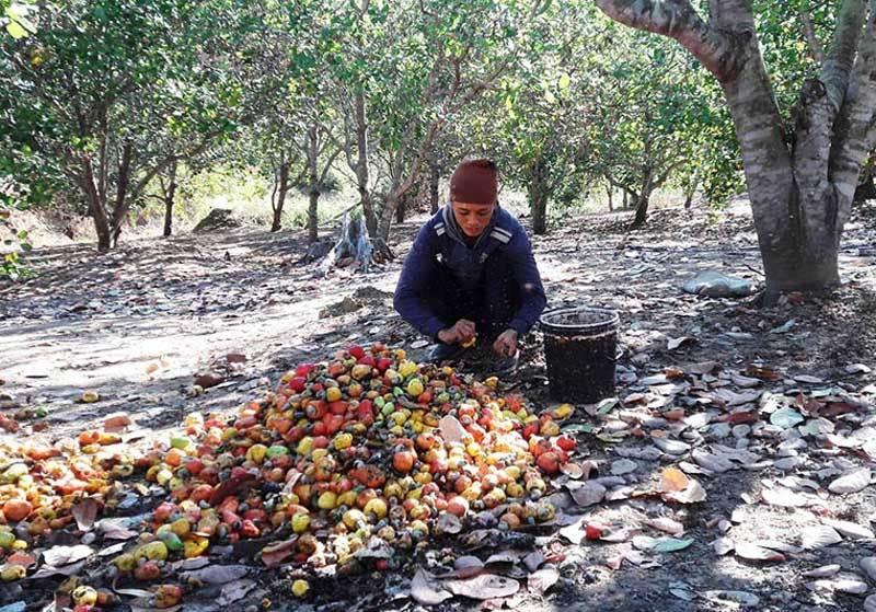 Hàng ngoại đổ về, đặc sản Việt giảm giá kỷ lục, dân kêu lỗ nặng-2