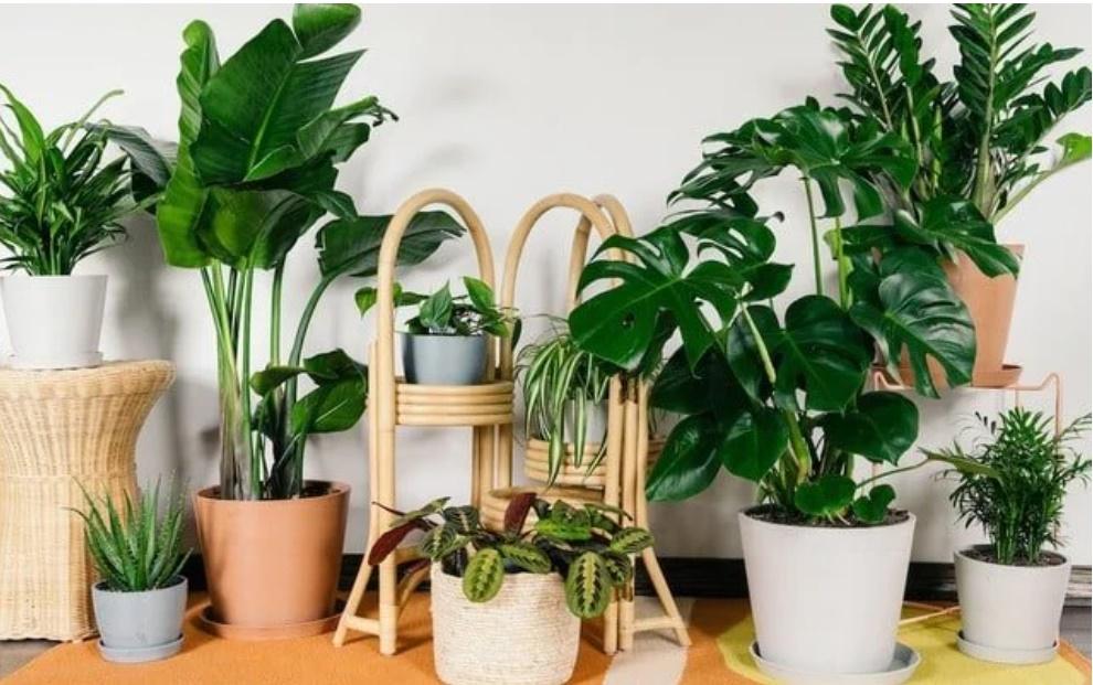 5 vị trí trong nhà nên đặt cây xanh để tăng vận khí, cây càng tươi tốt càng nhiều may mắn-1