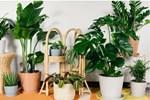 5 vị trí trong nhà nên đặt cây xanh để tăng vận khí, cây càng tươi tốt càng nhiều may mắn