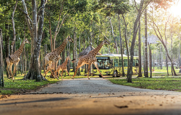 Vingroup khai trương siêu quần thể nghỉ dưỡng, vui chơi, giải trí hàng đầu Đông Nam Á-15