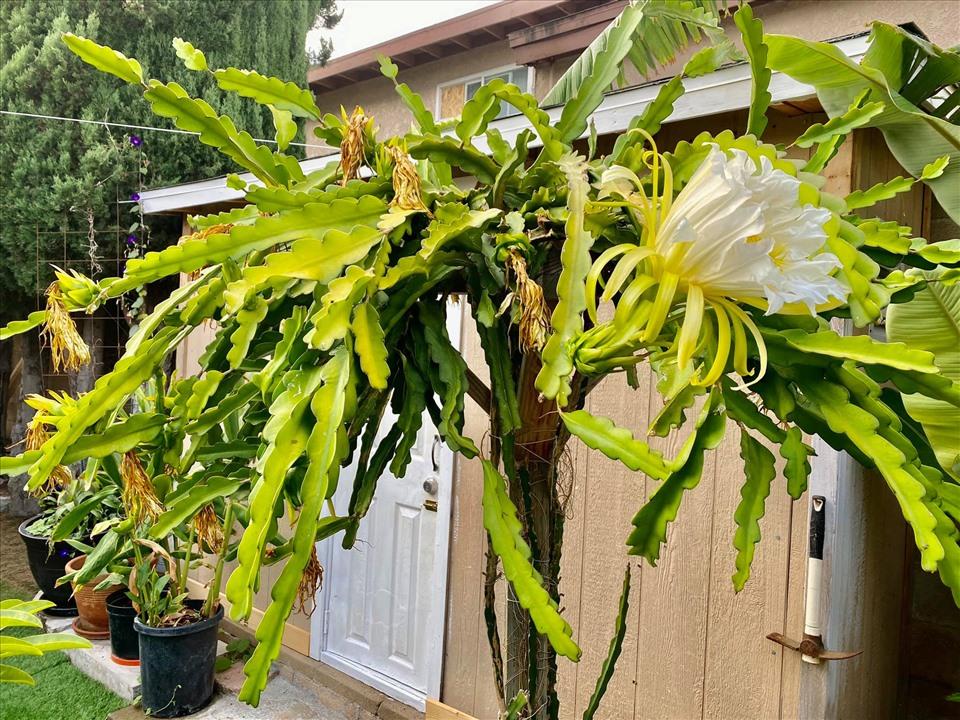 Cách bài trí sân vườn tươi mát và nhiều hoa của danh ca Hương Lan-14