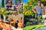 Cách bài trí sân vườn tươi mát và nhiều hoa của danh ca Hương Lan