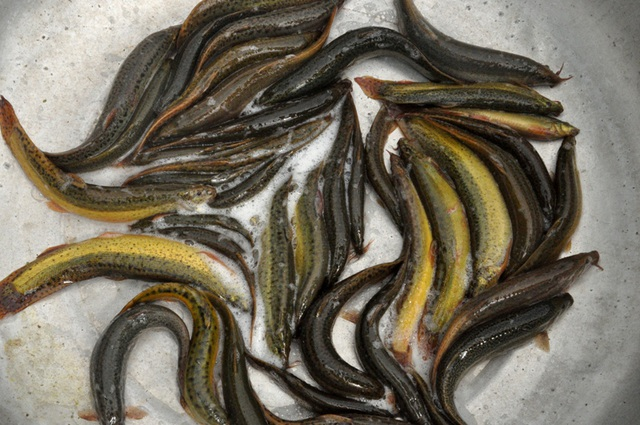 8X bỏ nghề điều dưỡng về quê làm bạn với ốc, cá, kiếm nửa tỷ đồng mỗi năm-5