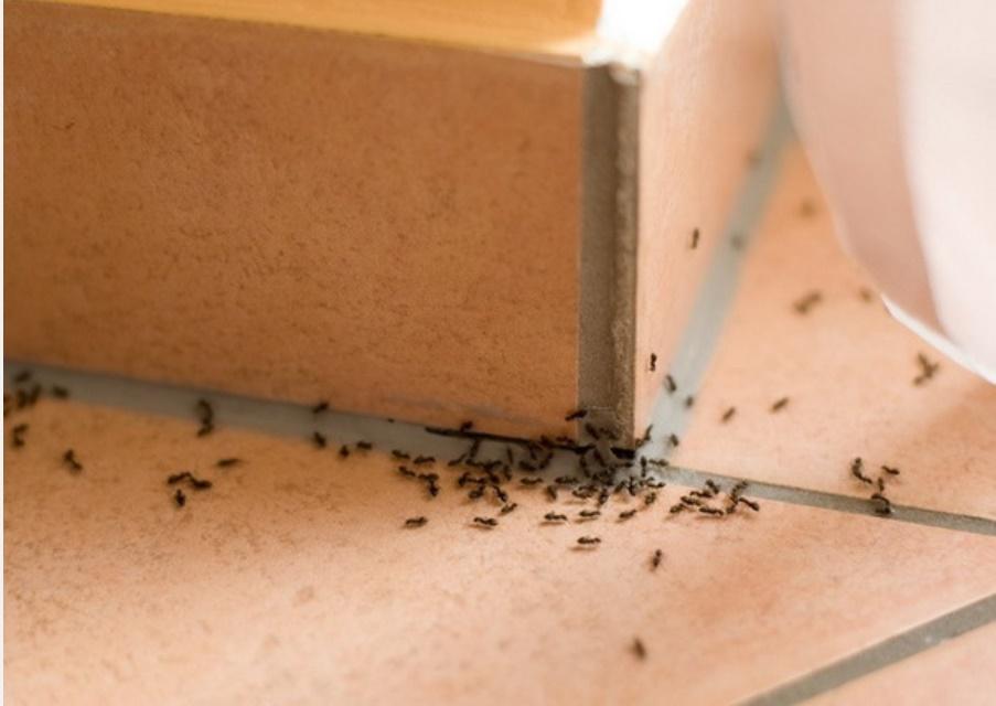 5 mẹo đuổi côn trùng tại nhà tiết kiệm, vừa hiệu quả lại không lo độc hại cho sức khỏe-1
