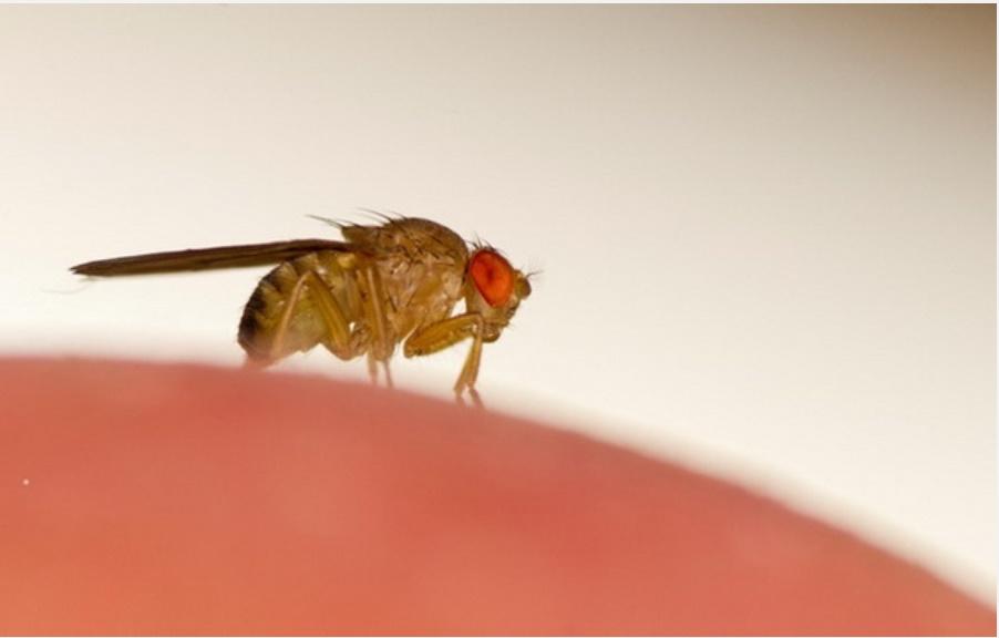 5 mẹo đuổi côn trùng tại nhà tiết kiệm, vừa hiệu quả lại không lo độc hại cho sức khỏe-3