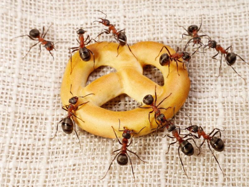 5 mẹo đuổi côn trùng tại nhà tiết kiệm, vừa hiệu quả lại không lo độc hại cho sức khỏe-2