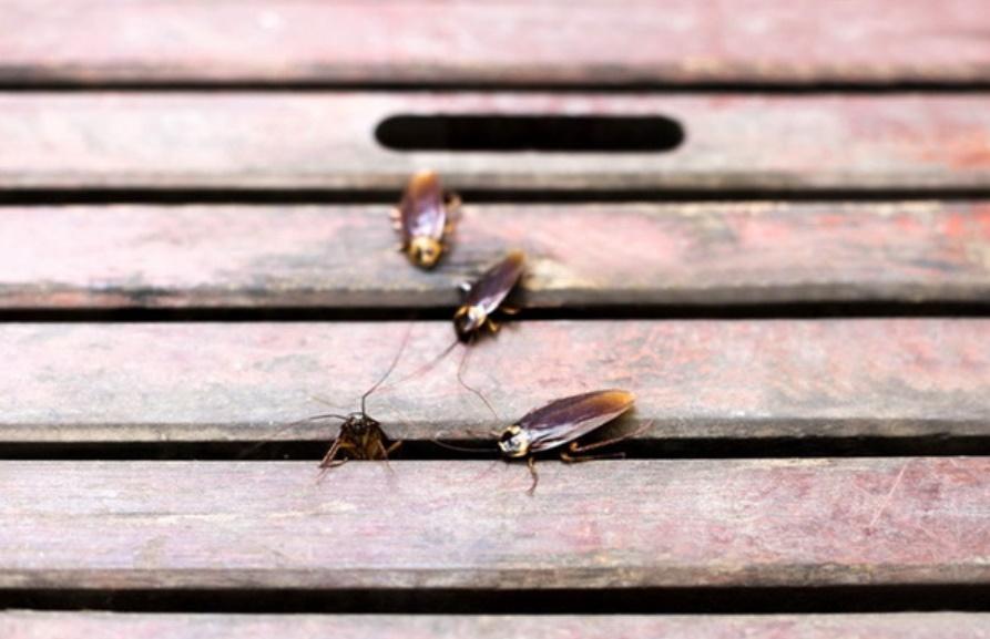 5 mẹo đuổi côn trùng tại nhà tiết kiệm, vừa hiệu quả lại không lo độc hại cho sức khỏe-5