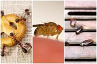 5 mẹo đuổi côn trùng tại nhà tiết kiệm, vừa hiệu quả lại không lo độc hại cho sức khỏe