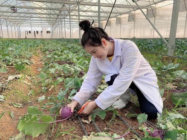 Lý Nhã Kỳ thu hoạch trái cây, hoa và rau củ trong khu vườn 50 ha ở Đà Lạt-4