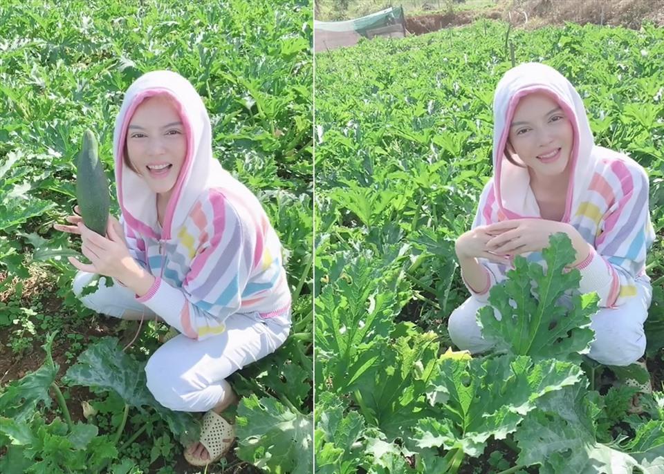 Lý Nhã Kỳ thu hoạch trái cây, hoa và rau củ trong khu vườn 50 ha ở Đà Lạt-6