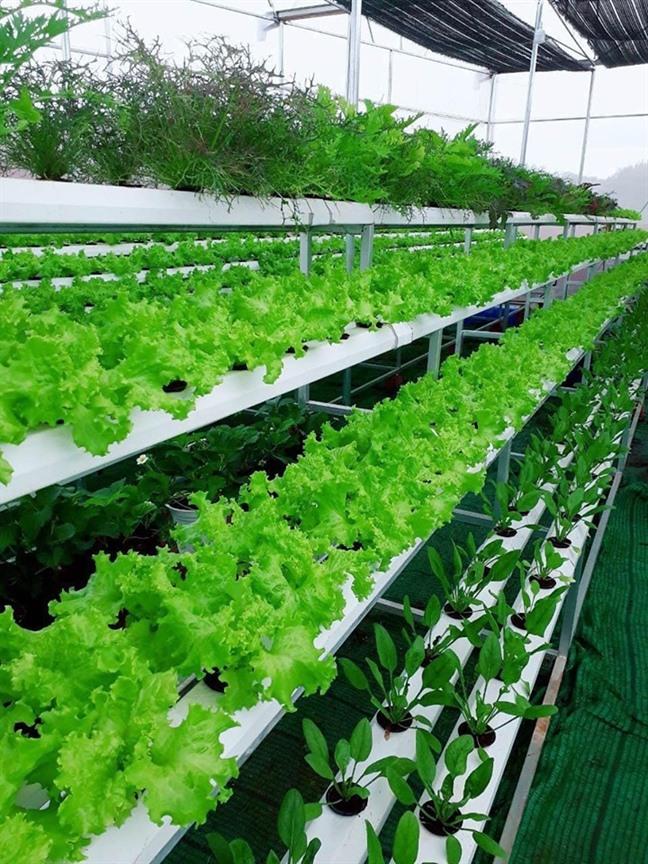 Lý Nhã Kỳ thu hoạch trái cây, hoa và rau củ trong khu vườn 50 ha ở Đà Lạt-10