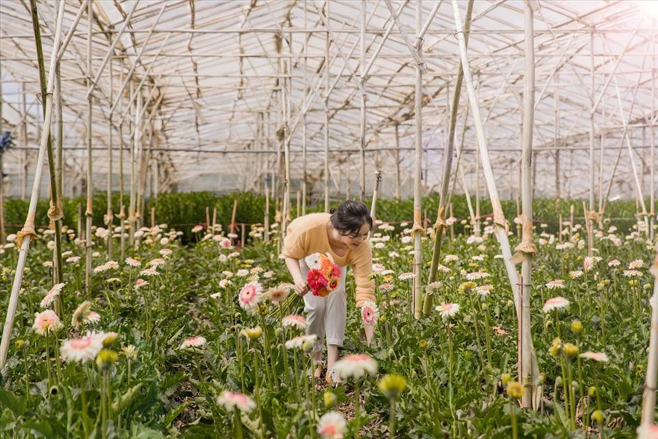 Lý Nhã Kỳ thu hoạch trái cây, hoa và rau củ trong khu vườn 50 ha ở Đà Lạt-13
