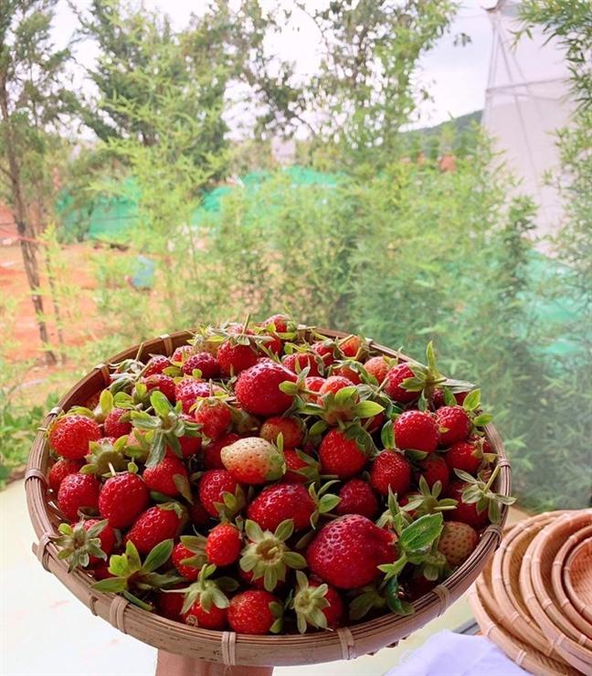 Lý Nhã Kỳ thu hoạch trái cây, hoa và rau củ trong khu vườn 50 ha ở Đà Lạt-15
