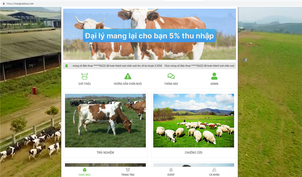 Tin vào chủ trang trại ở nước ngoài, hàng nghìn người nuôi bò online sập bẫy đa cấp, mất trắng hàng trăm triệu đồng-1