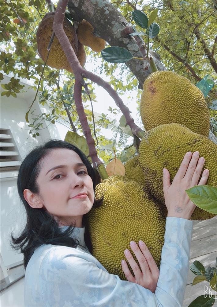 Cùng Việt Trinh đi thu hoạch nhiều loại trái cây trong vườn 2.500m2-1