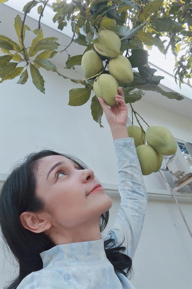 Cùng Việt Trinh đi thu hoạch nhiều loại trái cây trong vườn 2.500m2-6